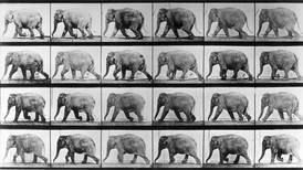En elefant er ikke en blyant
