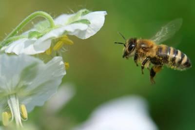 Er topptrente bier fremtidens søkshunder?