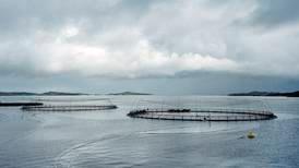 Alt går kjempefint i Sjømatrådet